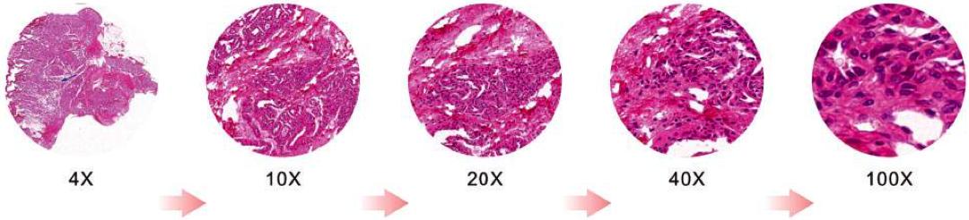 生物正置显微镜