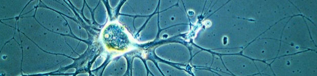 生物倒置显微镜