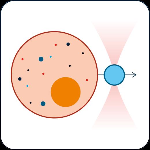 光镊 - 用于研究细胞和组织生物力的工具